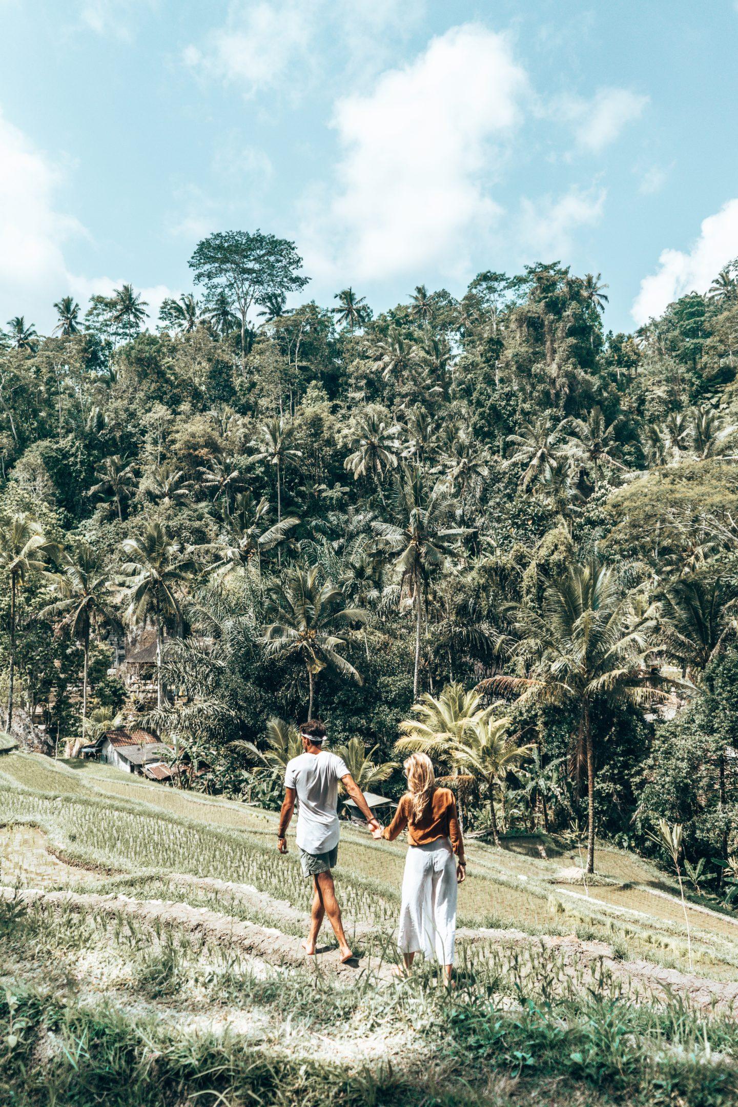 rice terraces - 3-WEEK INDONESIA GUIDE